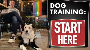 Dog Training Fundamentals (Watch this before any other dog training video)