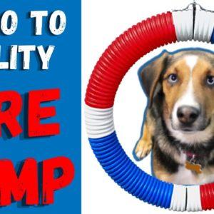 How To Introduce Dog AGILITY Obstacles | Teach Basic Agility To Your Dog -Part 2