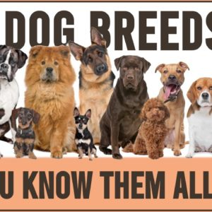 These Are 100 Dog Breeds That Currently Exist