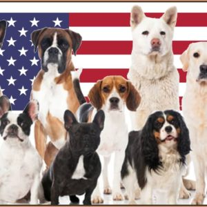 Top 10 American Dog Breeds | Dog World