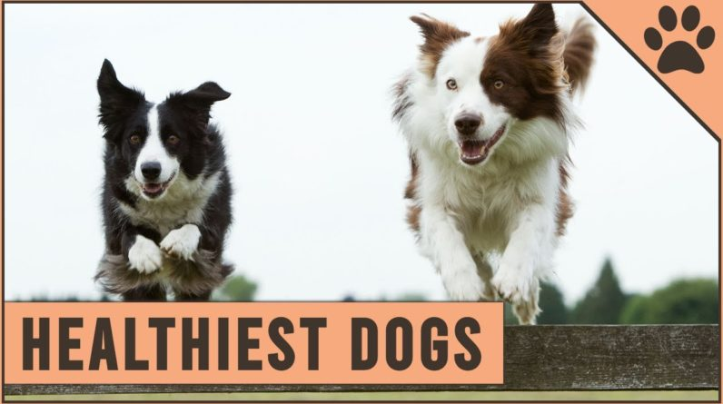 Top 10 Healthiest Dog Breeds | Dog World