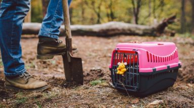 TOP #126: How To Prepare for the Passing of A Pet