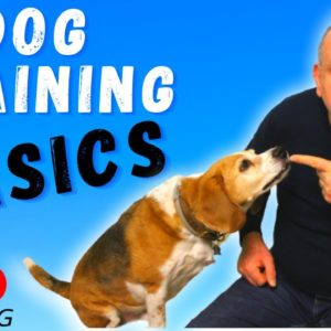 Dog Training Basics Every Dog Owners Needs To Know.