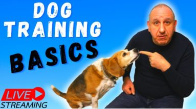 Dog Training Basics Every Dog Owners Needs To Know.