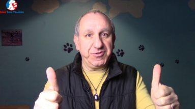 Saro Dog Training Website - Welcome To Saro Dog Training
