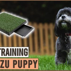 Secret Tips On How To Potty Train A Shih Tzu Puppy | Dog World