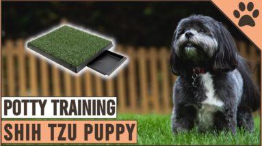 Secret Tips On How To Potty Train A Shih Tzu Puppy | Dog World