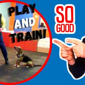Training Games To Play With Your Dog By Saro Dog Training