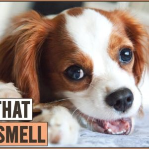 10 Dog Breeds That Don't Smell Part 2 | Dog World