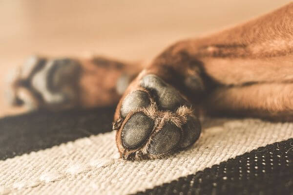 How to Clean Dog Paws