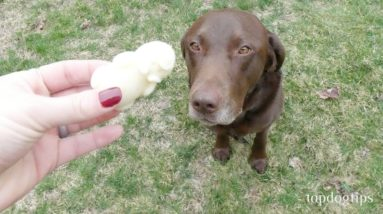 Apple and Honey Ice Cream for Dogs