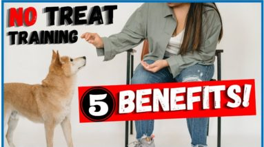 Benefits Of NOT Using TREATS To Train Your Dog