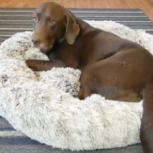 BingoPaw Donut Shaped Dog Bed Review