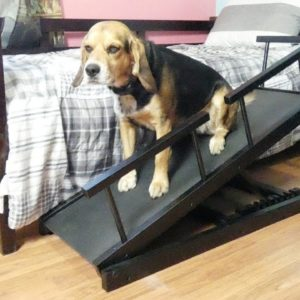 Chasing Tails Adjustable Height Dog Ramp