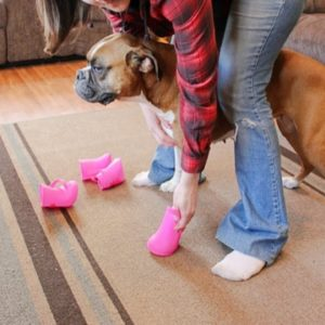 DIY Dog Boots: How To Make Them Without Sewing
