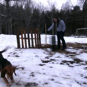 DIY Dog Fence: How To Make One