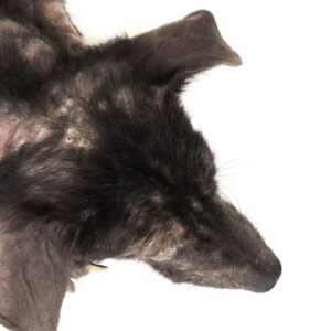 Dog Hair Loss Home Remedies