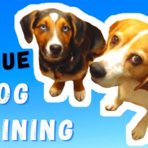 DOG TRAINING WITHOUT TREATS | THE NEW & THE BEST METHOD OF DOG TRAINING