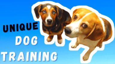 DOG TRAINING WITHOUT TREATS | THE NEW & THE BEST METHOD OF DOG TRAINING