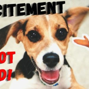 Excitement | Excited Dog Leads To Bad Behaviour