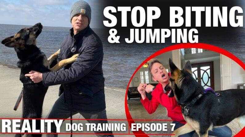 I HAVE to get this dog to STOP BITING & JUMPING!!!