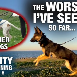 After 7 Days with this TOTALLY UNTRAINED DOG, I can't believe THIS happened. Reality Dog Training