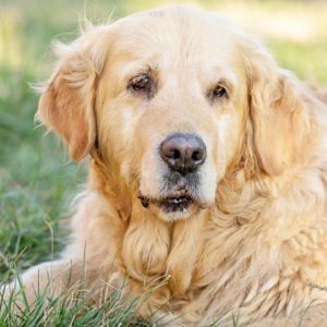 TOP #130: Sarcopenia in Dogs - What Is It and How To Treat It?