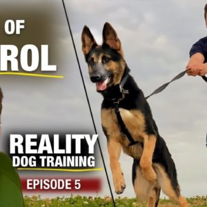 Uh Oh. Reality Dog Training Episode 5