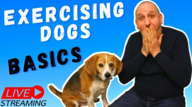 Exercising dogs | The right way to get the best behaviour out of your dog.
