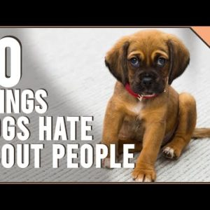 10 Things Dog Hate About People | Dog World