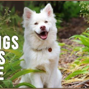 10 Things Dogs Love The Most | Dog World