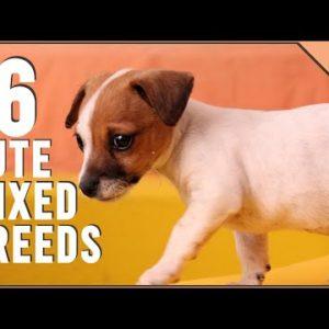 16 Unbelievable Cute Cross Dog Breeds | Dog World