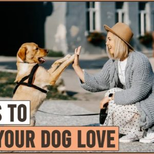 7 Ways To Tell Your Dog You Love It | Dog World