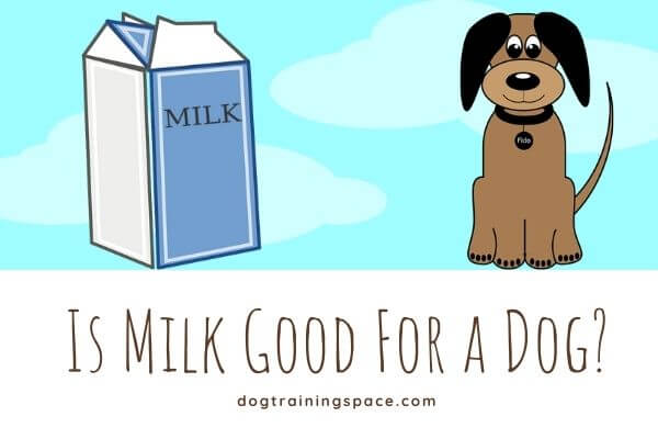 is milk good for a dog