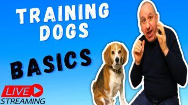 Benefits Of Dog Training using Saro dog training