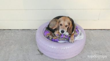 DIY Dog Bed Made with An Old Tire