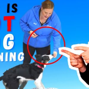 Dog Training Methods That Suck |Treat Training By McCann Dog Training