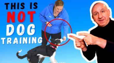 Dog Training Methods That Suck |Treat Training By McCann Dog Training