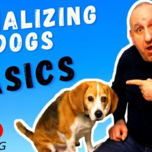 ✅How to socialize a new puppy with dogs and people❓
