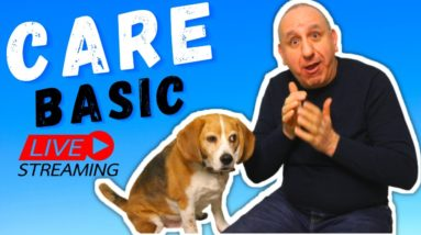 How to CARE the BEST for your dog?