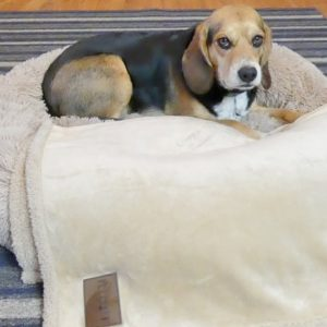 Pet Craft Supply Calming Dog Bed Review