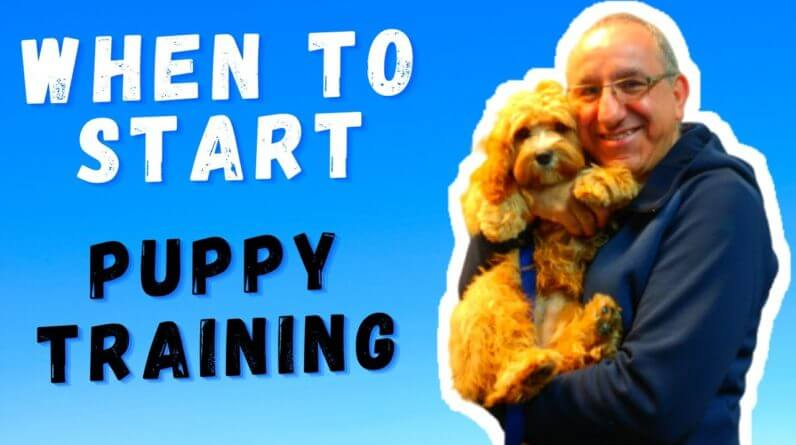 When To START Training My Puppy & What Do I Train First
