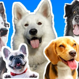 Which Dog Breed Is Easier To Train? An interactive Live Dog Training