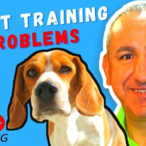 Should you use treats to train your dog? Live Q&A Session on Saro Dog Training
