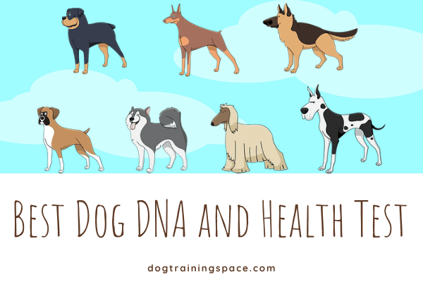 38 Paw Dog DNA and Health Test Review