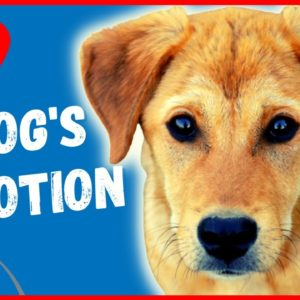 🐶A DOGS DEVOTION - 🐕What You Mean To Your Dog- A Film By Saro