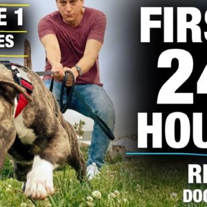 **NEW SERIES!**The FIRST 24 HOURS with a TOTALLY UNTRAINED Pit Bull [Reality Dog Training Episode 1]
