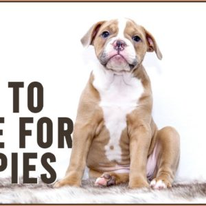 How To Care For Puppies - Puppy Guide | Dog World