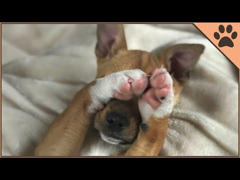 How To Cut Your Dogs Nail At Home | Dog World