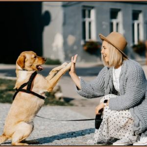 How To Train A Puppy | Dog World